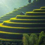 Une écologie de civilisation en lieu et place de l'écologisme punitif